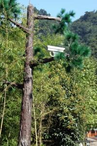 Big Brother is watching you! Hier von einem Plastikbaum.